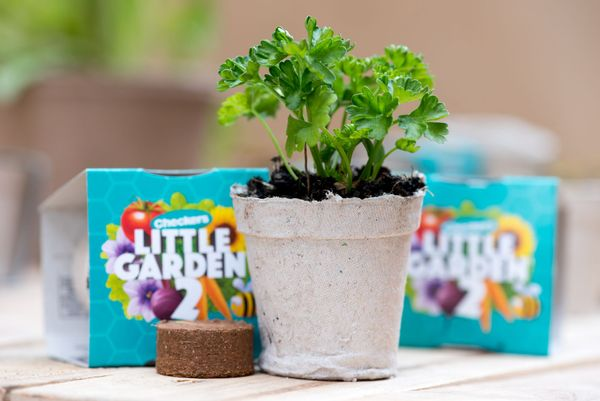 Little Garden is back at Checkers